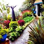 Un jardin bien entretenu en plein centre ville