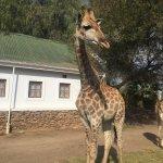 Chandelier Game Lodge & Ostrich Show Farm Foto