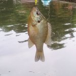 beautiful fish we caught so many
