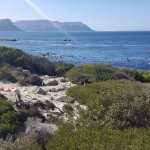 View from Boulders Beach