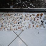 Sea shells from Sanibel Island