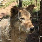 Colorado Wolf and Wildlife Center Foto