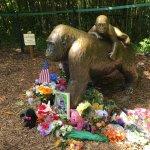 Flower tributes at cincinati zoo.