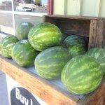 Watermelons, CJ Olson Cherries, Sunnyvale, CA
