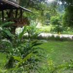 View from the bungalow of hammocks and river