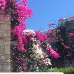Dionysos Seaside Resort Foto