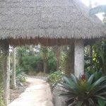 Auckland Botanic Gardens Foto