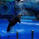 Photo de SeaWorld Orlando