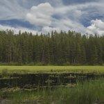 Ponderosa State Park Foto