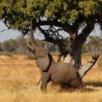Camp Okavango Foto