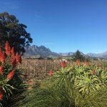Sanbona Wildlife Reserve - Tilney Manor, Dwyka Tented Lodge, Gondwana Lodge Foto