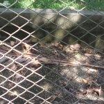 CIGS Zoo Foto