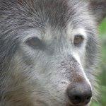 Foto de Wolf Sanctuary of PA