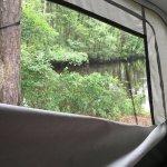 Wading Pines Foto