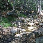 Wheeler Gorge creek.