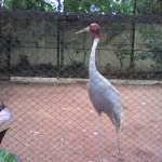 Bird from different place of the country