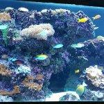 Foto de The Florida Aquarium
