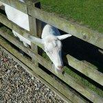 Photo de Barker Stakes Farm
