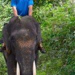 Photo de Expedition Jungle