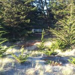 Bodega Bay Dunes Campground - site #01