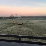 An alpaca frost. From our porch. Donkeys and cows over next fence. Nirvana!