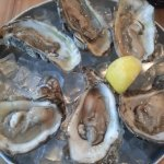 Raw Oysters on half shell.