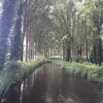 Canadian Poplar lined canal between Bruges and Damme. Beautiful easy rided.