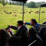 Visite chez les bisons