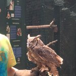 This owl was shot by someone and is missing part of a wing. He will have a safe home at the refu