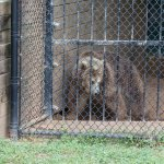 Chestatee Wildlife Preserve & Zoo