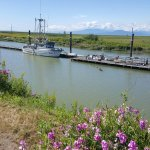 Steveston Heritage Fishing Village Foto