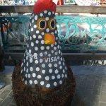 galinha raiz de coqueiro