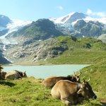 Der Steingletscher mit dem See und Alpbetrieb!