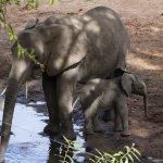 Tintswalo Safari Lodge Foto
