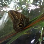 Photo de Mariposario Butterfly Garden