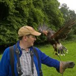 West of England Falconry Picture
