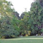 partie gauche du parc Magnolia immense et sequoia