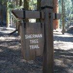 Sherman Tree Trail