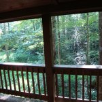Wooded view from deck.