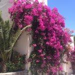 Platinum Travel Santorini
