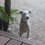 Little puppy!