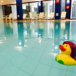 Duck having a good time in the pool