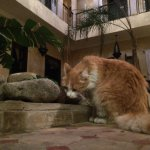 The riad cat is very fluffy but keeps her distance - especially from 4 year olds!