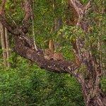 Photo de Kabini River Lodge