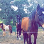 Albufeira riding center is amazing the horses are amazing and all the staff are absolutely great