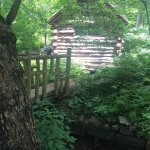 Foto de Morris Arboretum