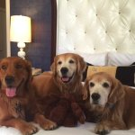 The Goldens give the hotel an A+