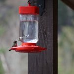 Hummingbirds visited a feeder on the second floor porch