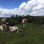 Photo de Corndonford Farm