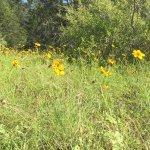Foto de McKinney Falls State Park